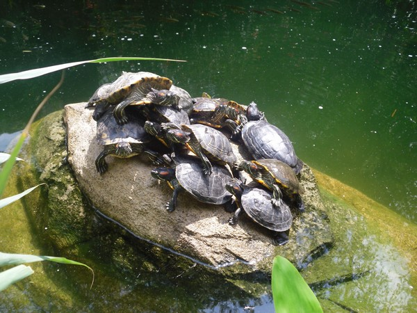 Amas de tortues
